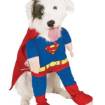 superman_dog_costume